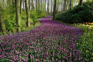 Blumenwiese introvertiert extrovertiert