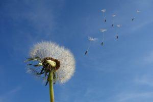 Achtsamkeitsübung mit Kindern Pusteblumen-Reise